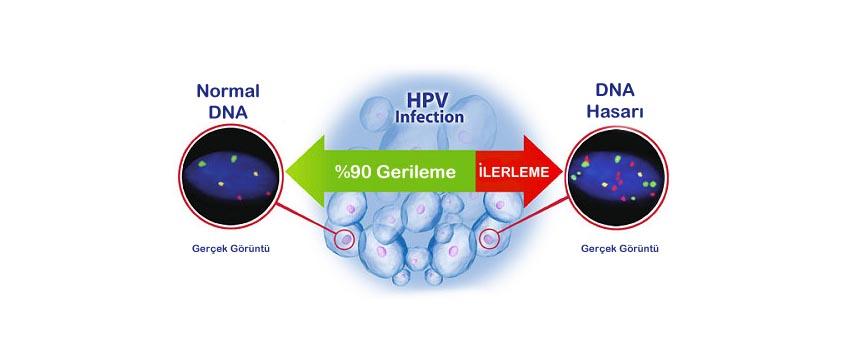 Helmintox grossesse - Papilloma e gravidanza, Helmintox et grossesse - Hpv negatif kad nlar kulubu